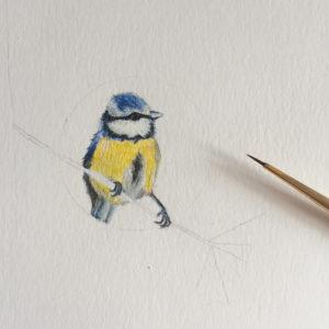 aquarel-geboortekaartje-vogeltje-dieren-prentje-geschilderd-koolmeesje-lief-eigen-leuk-origineel-amsterdam
